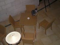Cats' Road@Jordan ヨルダンの狛猫(こまねこ) - Diamond Gold Body by Smiling, Laughing 笑って金剛身
