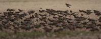 冬の使者たち - 野鳥フレンド  撮り日記
