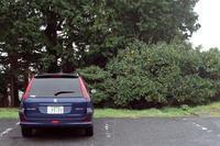 果実と紺色の車のある風景 - 店長のガラクタ部屋