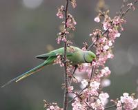 ダーウインでやってましたね - Life with Birds 3