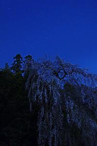 夜桜@高麗神社 - デジカメ写真集