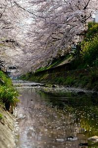 春の日に思う - リズムのある暮らし