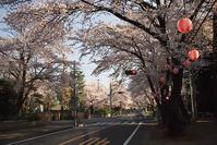 日光街道の桜並木 - デジカメ写真集