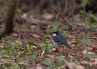再び長野遠征 - 写真で綴る野鳥ごよみ
