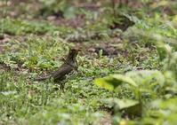 鳥の好きな場所 - 写真で綴る野鳥ごよみ