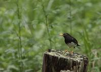 鳥が好きな場所ー2 - 写真で綴る野鳥ごよみ