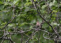 北海道ー残りもの - 写真で綴る野鳥ごよみ