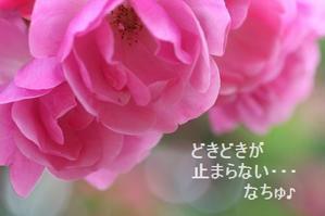 どきどきの時間・・☆ - ☆ハッピーフラワー「K」