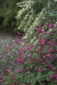 秩父、長瀞の七草寺に咲く花々 - デジカメ写真集