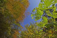 奥多摩丹波の紅葉-その2 - デジカメ写真集