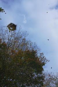 奥多摩の紅葉 - デジカメ写真集