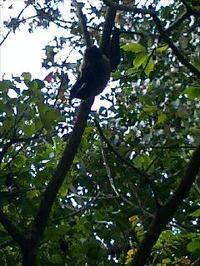 識名園で、蝙蝠を見かけた - きょうのばんごはん