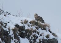 北の国の探鳥ー1 - 写真で綴る野鳥ごよみ