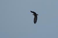 北国へ - 野鳥フレンド  撮り日記