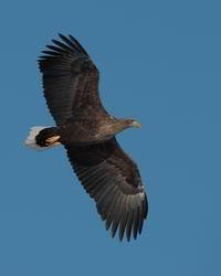 北国へ4 - 野鳥フレンド  撮り日記