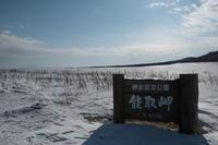 北国へ!エピローグ - 野鳥フレンド  撮り日記