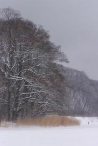 粉雪舞う網走湖上 -  アルビレオの 雑記帳