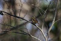 今日は鳥撮り - ichibey日々の記録