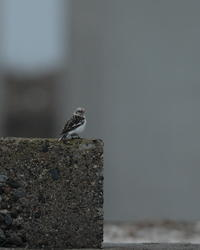 鳥見ツアー - 野鳥フレンド  撮り日記
