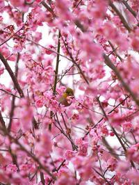 2月27日朝種松山梅園 - 風まかせ、カメラまかせ