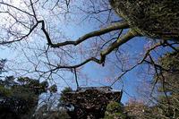 桜を求めて高麗、川越 - デジカメ写真集