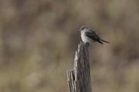 信州へ - 野鳥フレンド  撮り日記