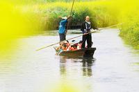 菜の花と新河岸観光舟運@新河岸 - デジカメ写真集