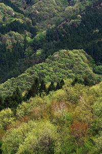新緑萌える奥武蔵の山々 - デジカメ写真集