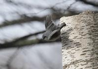 長野県にてー3 - 写真で綴る野鳥ごよみ