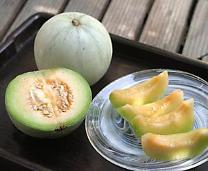 初夏の味・プリンスメロン - Botanic Journal - 植物誌 -