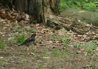 鳥が好きな場所ー3 - 写真で綴る野鳥ごよみ