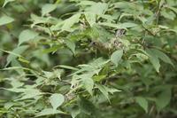 高原の温泉へ - 野鳥フレンド  撮り日記