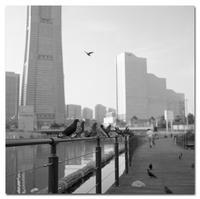 #2451 鳩 - at the port