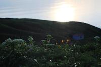 礼文島の花 -  アルビレオの 雑記帳