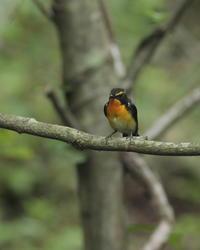 高原の温泉Ⅱ - 野鳥フレンド  撮り日記