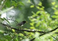 暑さを避けて-2 - 写真で綴る野鳥ごよみ