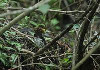 暑さを避けて-続4 - 写真で綴る野鳥ごよみ