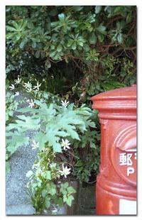 #2463郵便ポスト - at the port