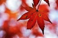 奥多摩、御岳の紅葉 - デジカメ写真集