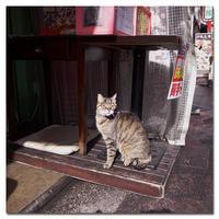 #2563中華街の猫 - at the port