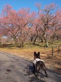 今日はワンコと武蔵丘陵森林公園 - ichibey日々の記録