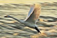 飛翔 - デジカメ写真集