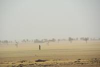 【世界の砂漠】スーダン、ヌビア砂漠と野生のラクダ - ヤスコヴィッチのぽれぽれBLOG
