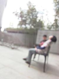 猫と睡蓮 - 風まかせ、カメラまかせ