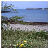 #2429 海とタンポポ - at the port