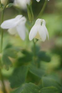 可憐な花だが・・ -  アルビレオの 雑記帳