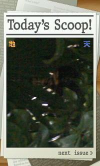 コガタスズメバチの巣 - あるiBook G4ユーザによるブログ