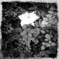 #2011.9.12 - Tomoki Photolog+