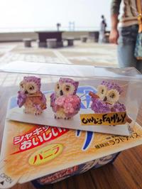 OWL'S FAMILY - 風まかせ、カメラまかせ
