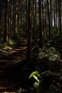 秋の高麗の里 - デジカメ写真集